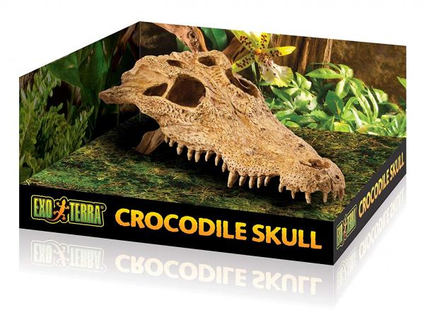 Декор череп крокодила